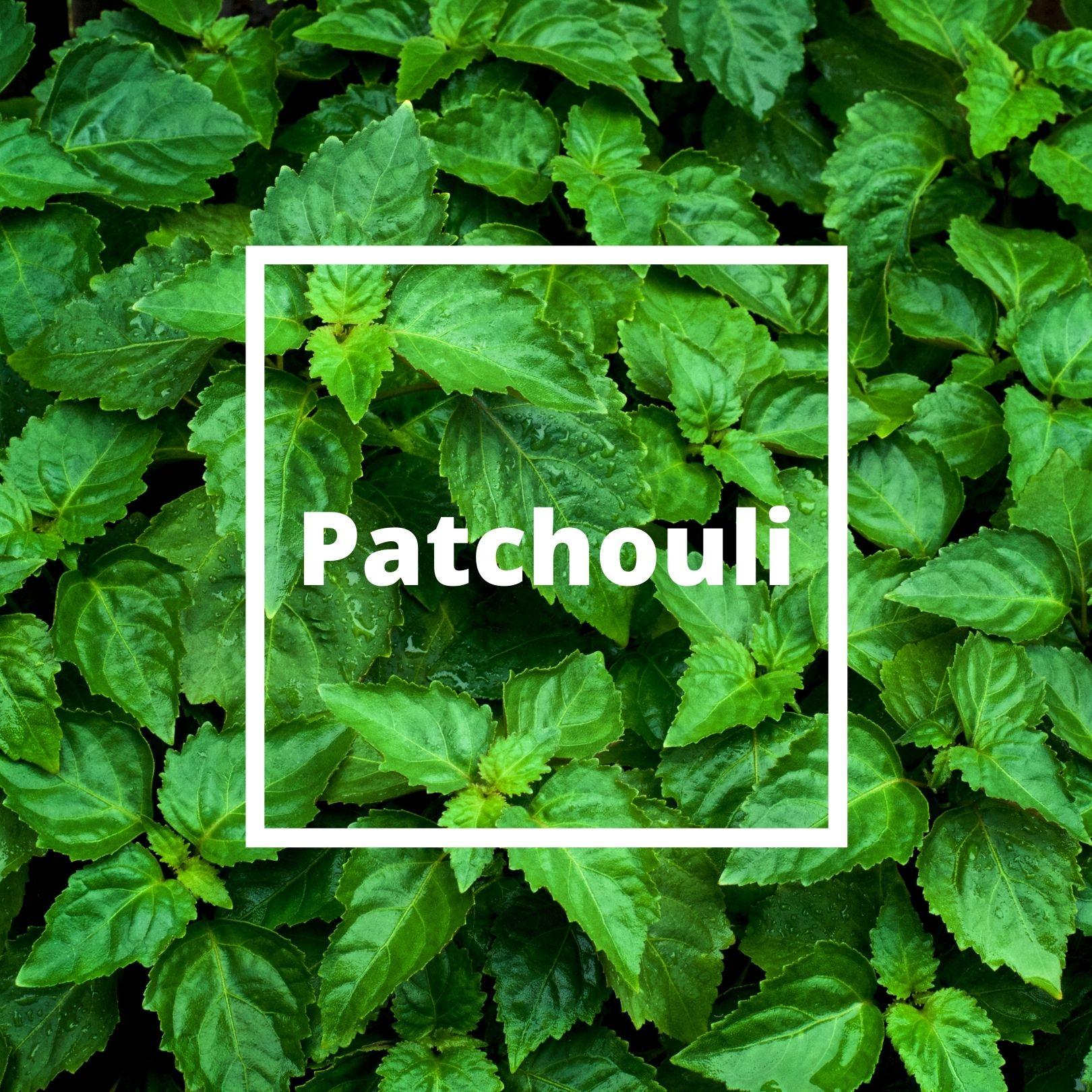 L'ATELIERO - Patchouli - Innocent Addiction