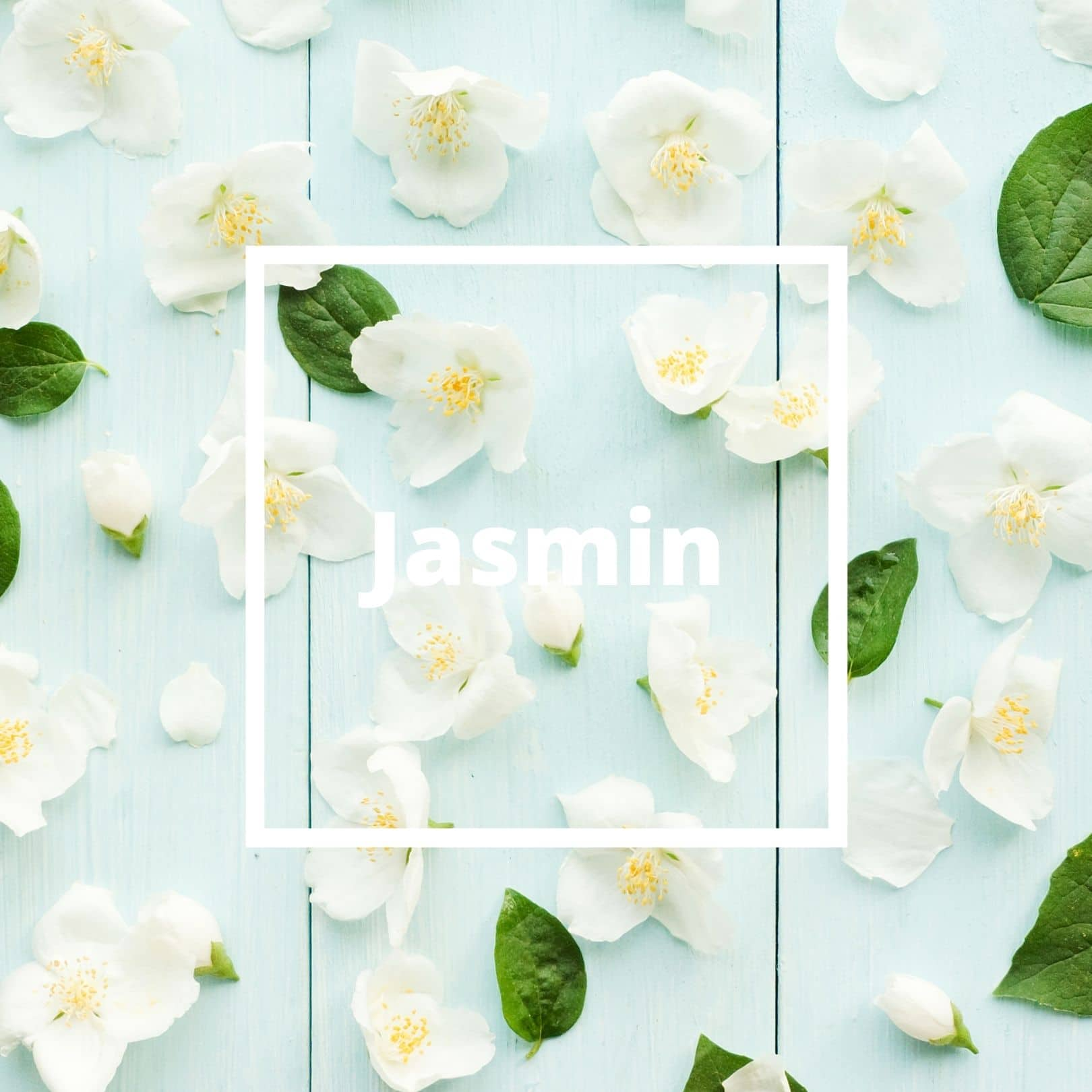 L'ATELIERO - Jasmin - The Queen