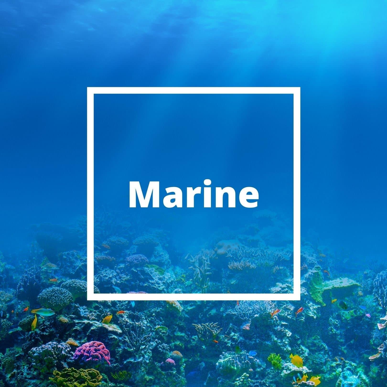 L'ATELIERO - Marine Notes - The One