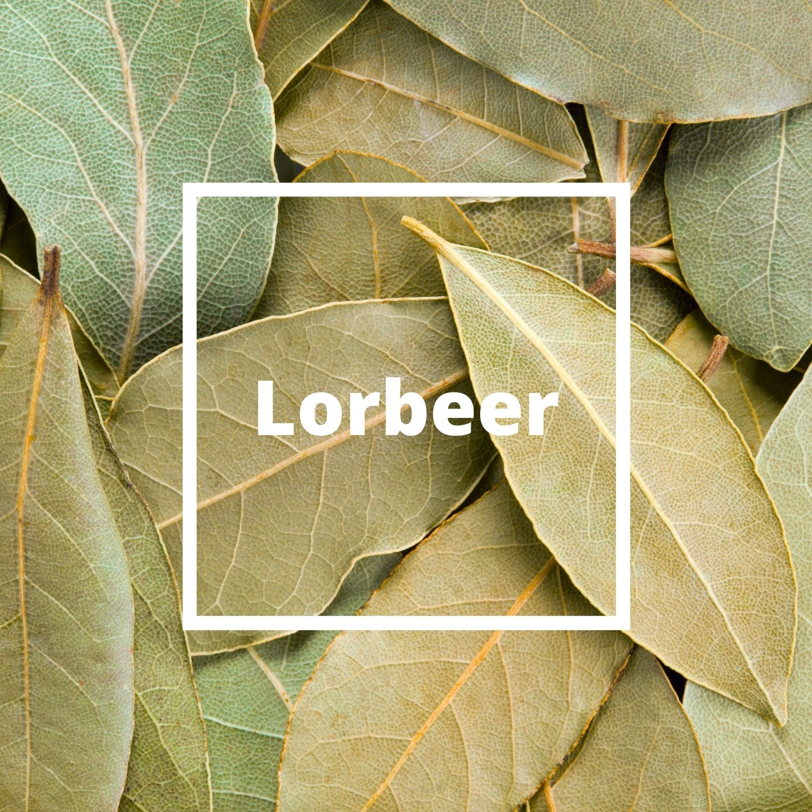 L'ATELIERO - Lorbeer - The One