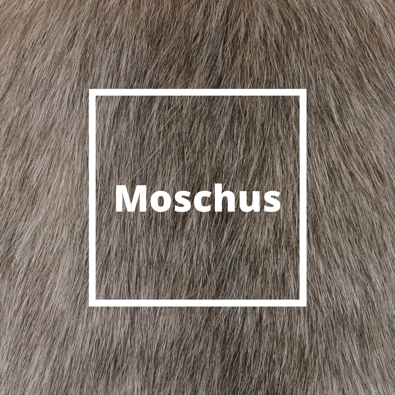 L'ATELIERO - Moschus - Victorious