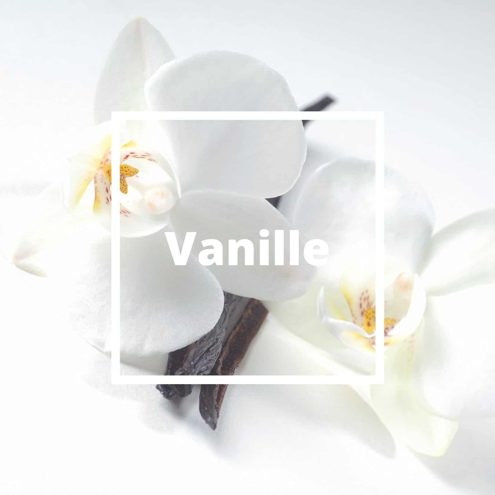 L'ATELIERO - Vanille - Belle Mademoiselle